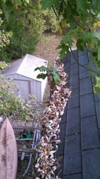 Leaf Packed Gutter Before